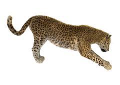 Big Cat Leopard Stock Illustration
