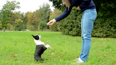 young attractive happy woman trains french bulldog in the park - the dog begs  - stock footage