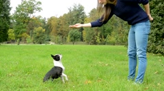 Young attractive woman trains her french bulldog in the park - dog sits and lies Stock Footage
