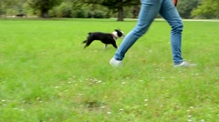 young attractive woman walks a french bulldog in the park - she tack leash - stock footage