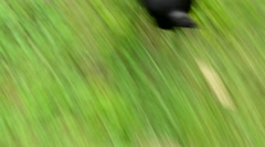 French bulldog run in the park - focus of his back Stock Footage