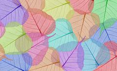 Decorative colorful skeleton leaves background Kuvituskuvat