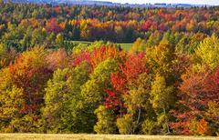 Autumn colours trees and hayfield Eastern Townships Foster Quebec Canada North - stock photo