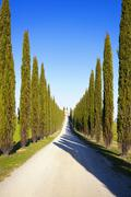 Tuscany, cypress trees and rural road, Italy, Europe - stock photo