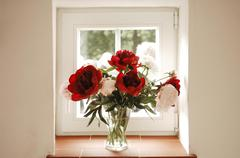 Peonies Paeoniaceae in the window Bavaria Germany Europe Stock Photos