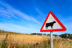 Waring sign for cow in  the country side in Aberdeen, Scotland UK Stock Photos