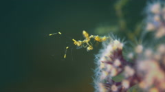 Skeleton Shrimp Stock Footage