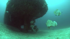 Wreck with a school of spadefish, Batfish Stock Footage