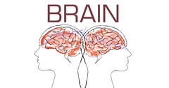 Two parts brains Stock Footage