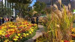 Autumnal Chrysanthemum Festival at Seoul Plaza. Seoul, South Korea. Stock Footage