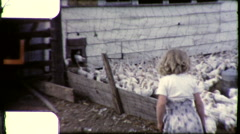 Girl Feeding Chickens Farm Pen Poultry 1950s  Vintage Film Home Movie 9201 Stock Footage