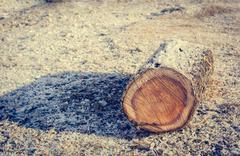 Frozen tree log. - stock photo