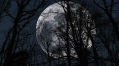 Big Moon Behind Fast Moving Trees Dramatic Cinematic Stock Footage