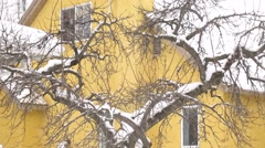 Snowfall on tree and a yellow house Stock Footage