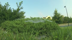Spider Webs on Bushes Stock Footage