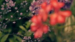 Camera shoots flowers of  geranium, kraspediya, chrysanthemums, daisy in motion - stock footage