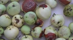 Rotten apple fruits turn around. 4K Stock Footage