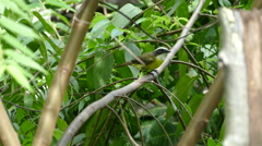 Little yellow bird in the forest Stock Footage