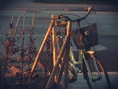 Aged Old Ladies Bicycle in Morning Light Stock Photos