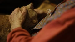 Elder woman with beautiful cat in her lap - stock footage