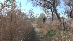 Camera movement among the dry reeds along the path by the river, autumn Stock Footage