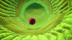 Inside human organism view. Virus in organism. Organic anatomy structure - stock footage
