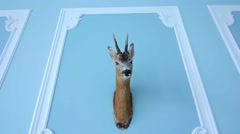 Deer head hanging on the wall - stock footage