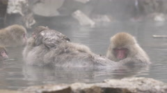 Snow Monkeys in Hot Spring in Japan - stock footage