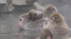 Snow Monkeys in Hot Spring in Japan Stock Footage