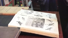 Opened old book catalog of the birds in the library, 4k Stock Footage