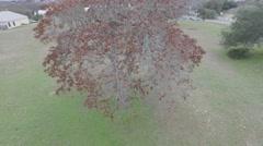 High Ridge Brown Oak Tree POI Stock Footage