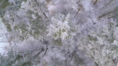 Aerial Birds Eye View Over Forest Trees Large House Acreage Snow Winter Drone - stock footage