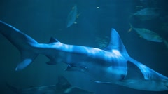 Sharks Philippines Aquarium - stock footage