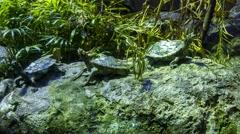 Turtle Tiny Sunbathe Stock Footage