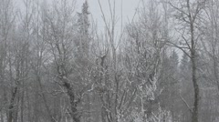 Snow Flakes Falling Trees In Background Winter Snowing Forest Slow Motion Stock Footage