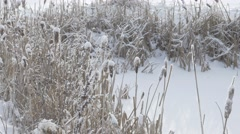 4k Frozen Pond Snow Covered Long Grass Willows Winter Snowing - stock footage