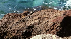 Crab taking sunbath. Stock Footage