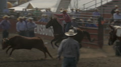 Cowboys chase and rope steer - stock footage