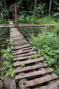 Narrow Footbridge in Forest Stock Photos