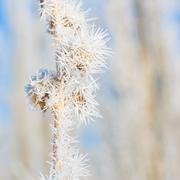 Stock Photo of Winter Hoar Frost Macro