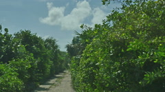 POV-Driving dirt road trhough stunted tropical growth along Cozumel coastline Stock Footage