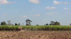 Sugarcane planting Stock Footage