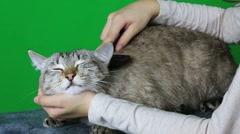 Combing hair cat after washing Stock Footage