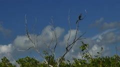 Small bird on dead branch against blue cloudy sky with wind blowing Stock Footage