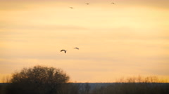 Two Cranes Fly Above Mountains in Silhouette Stock Footage