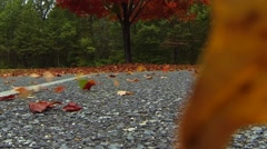 Strong Wind Blows Autumn Leaves - stock footage