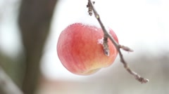 Winter Apple Stock Footage