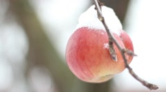 Winter Apple covered with snow Stock Footage
