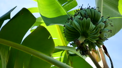 Banana leaves and sky background Stock Footage