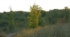 Alley surrounded by trees and wild plants at Caledon, Canada Stock Footage